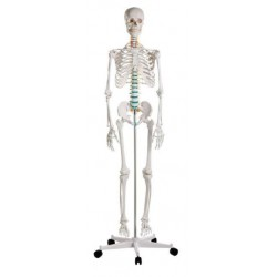 Esqueleto humano tamaño real oscar