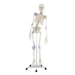 Esqueleto con columna y ligamentos movibles toni