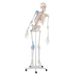 Esqueleto max articulado